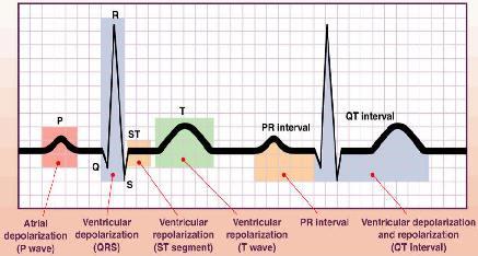 Electrocardiografía (ECG) - dalcame
